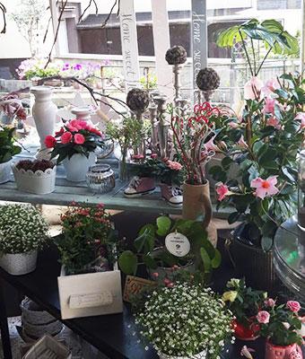 Blumenladen Siegen-Geisweid